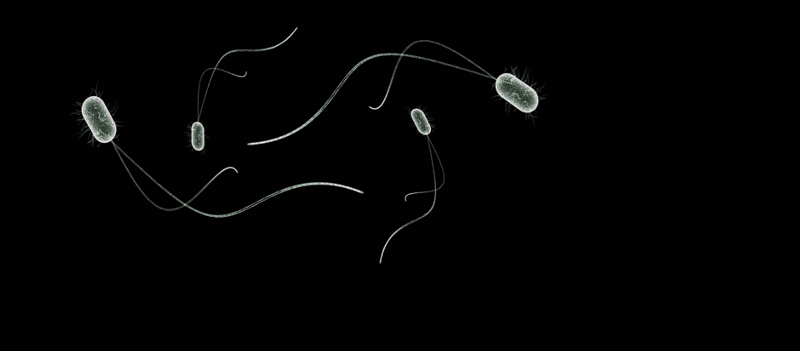Image of white luminescent bacteria on a black background